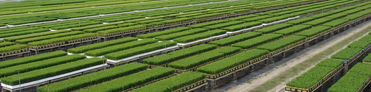 buy-seedlings-banner-resized