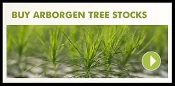 buy-seedlings-now-mini