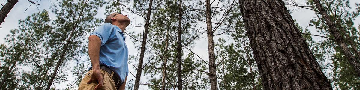 forest-management-resize