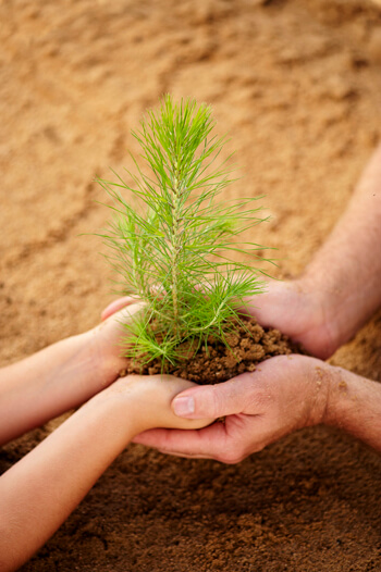 hands-with-seedling