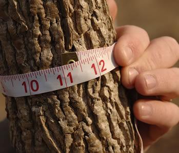 hardwoods-content-photo1